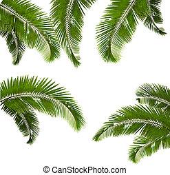 foglie, palma, set