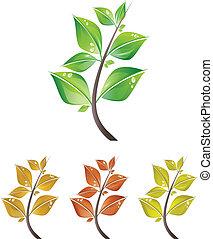 foglie, rami