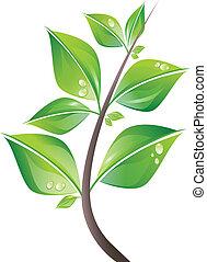 foglie, ramo