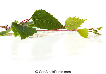 foglie, riflesso