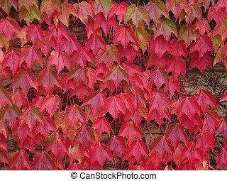 foglie, rosso