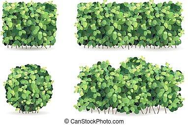 foglie, set, cespugli verdi
