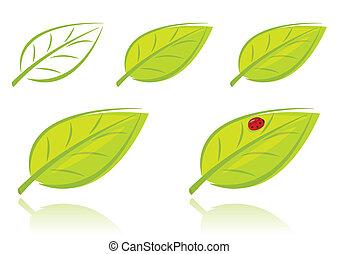 foglie, set, vettore, verde
