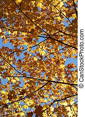 foglie, soleggiato