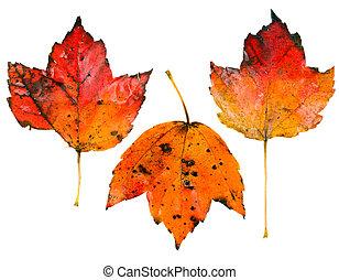 foglie tre