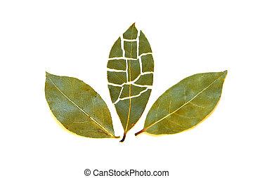foglie tre, baia