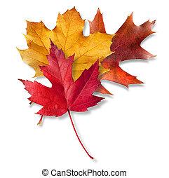 foglie tre, cadere