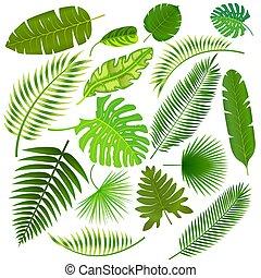 foglie, tropicale, vettore, collezione, illustrazione