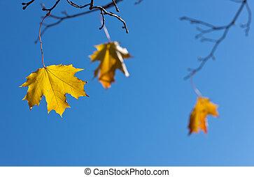 foglie, ultimo, tre