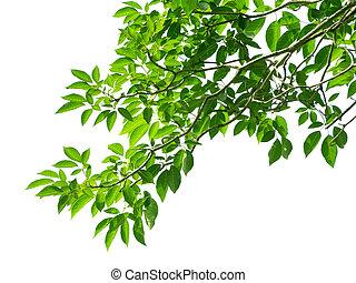 foglie, verde bianco, fondo