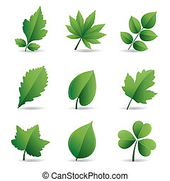 foglie, verde, elemento