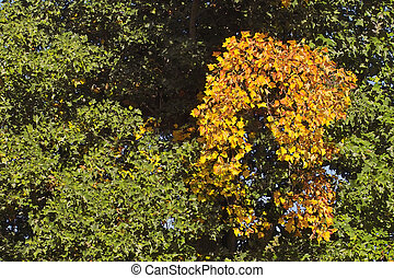 foglie, verde, giallo