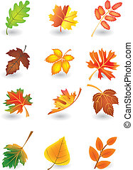 foglie, vettore