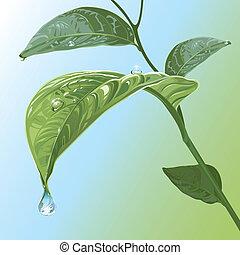 foglie, waterdrops