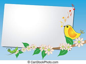 foglio, uccello, canzone