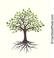 fondo., albero, foglie, isolato, bianco, roots., verde