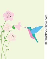 fondo, colibrì