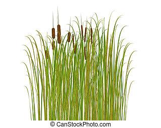 fondo, erba, isolato, bianco, giunco
