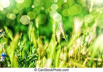 fondo, erba, natura, astratto
