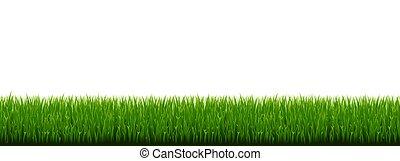 fondo, erba verde, bianco, bordo