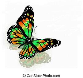 fondo, farfalla, isolato, bianco, colorare, verde
