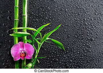 fondo, -, gocce, terme, orchidea