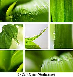 fondo., natura, verde, collage