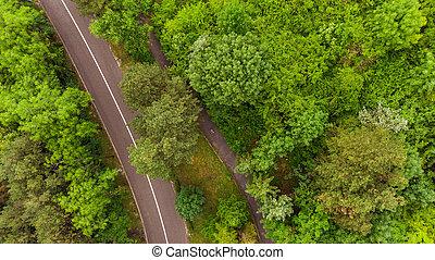 forest., attraverso, sopra, verde, strada, vista