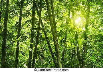 forest., bambù