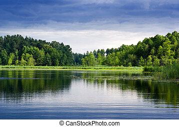 forest., lago
