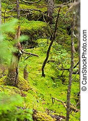 forest., selvatico, albero, muschio, profondo
