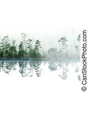 forest., su, isolato, superficie, mattina, lake., taiga, nebbia, water., tranquillo, giù