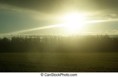 forest., tramonto, ritratto, sopra
