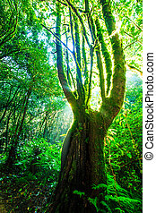 foresta, albero, verde, sunlight., grande, natura