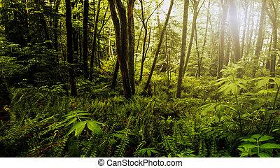 foresta, denso