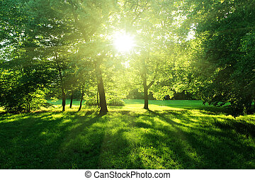 foresta, estate, albero