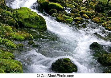 foresta, flusso
