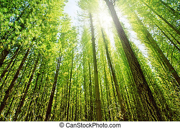 foresta, luce sole