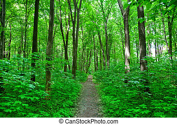 foresta, natura