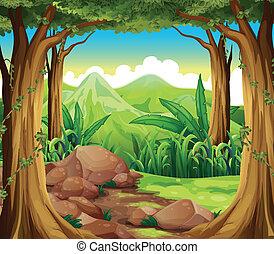 foresta, pietre
