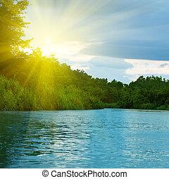 foresta, profondo, lago