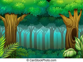 foresta, profondo