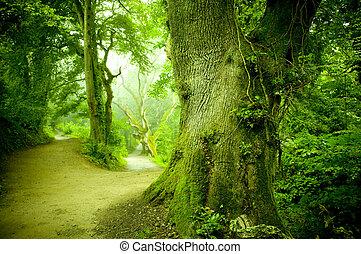 foresta, sentiero