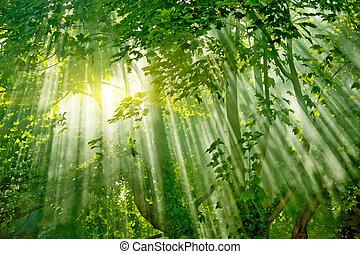 foresta, sunlights, magia