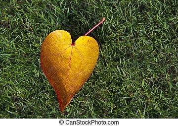 forma cuore, foglia