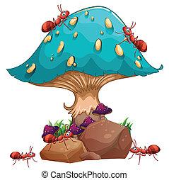 formiche, fungo, colonia, gigante