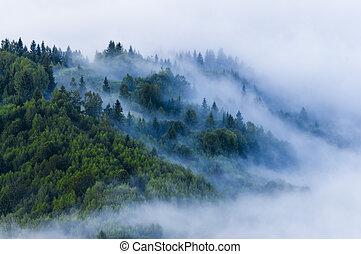 foschia, estate, nebbia, vista, fresco, mattina, forest., aereo