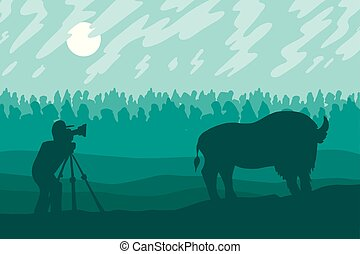 fotografie, fotografo, bisonte