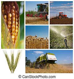 fotomontaggio, agricoltura