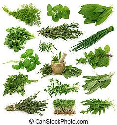 fresco, collezione, erbe